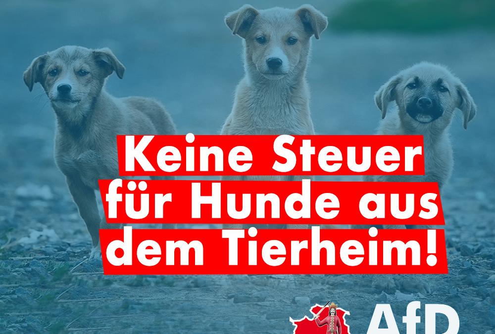 Keine Steuer für Hunde aus dem Tierheim